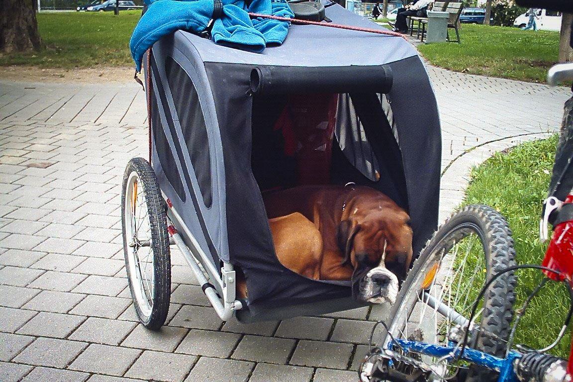 carrellino bici per cani