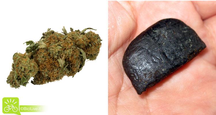 Un'efflorescenze di marijuana e un pezzo di hashish