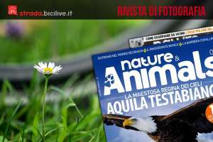 copertina di nature & animal con foto di bici